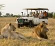 safari-tur-africa