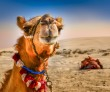 Detail of camel's head in the desert with funny expresion