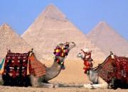 egypt-verblyud1