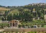 Gefsimanskij_sad_Ierusalim_Izrail_ekskursii_Egipet_turizm_religiya_dostoprimechatelnosti_Gefsimaniya