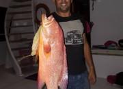safari fish