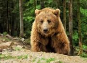 Центр реабилитации бурого медведя